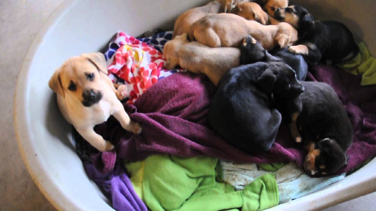 Mutt Dog Rescue