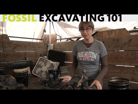 Excavating 101 with Carrie Howard at the La Brea Tar Pits and Museum