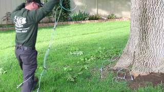 Emerald Ash Borer Prevention - Tree Trunk Injection