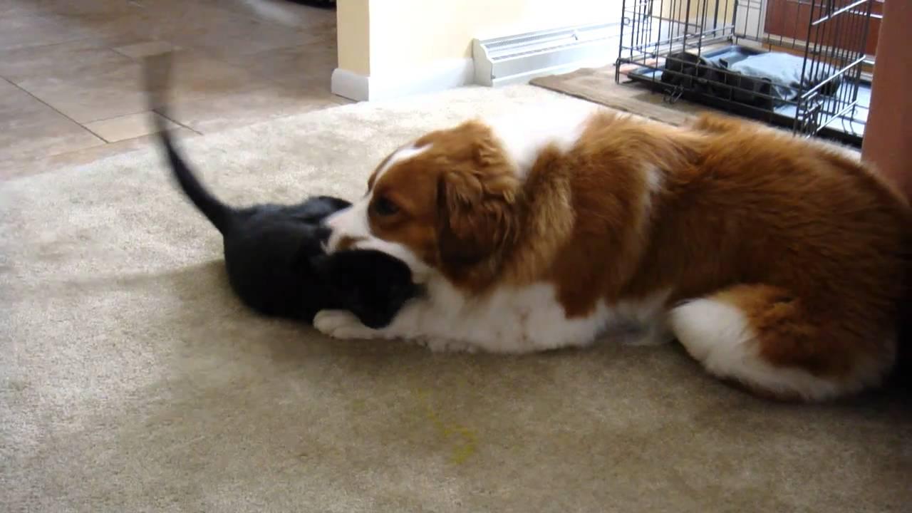 Dog Eating Dog Litter