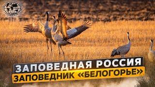 Заповедная Россия. Заповедник «Белогорье» | @Русское географическое общество