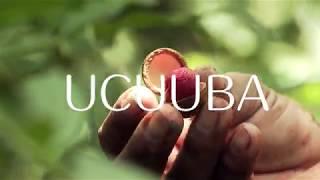 Natura Ekos | Ucuuba