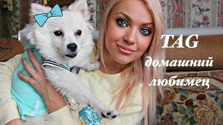 TAG: Домашний любимец ♥ Lucky Lina