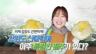 [ 절임배추 ] 강원도 절임배추로 맛있는 김장하세요~!