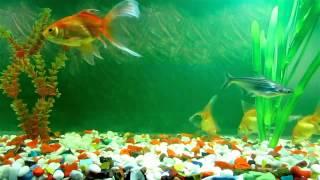 aquarium dreamsences