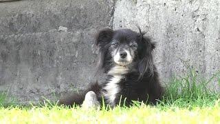 Неделя защиты животных: в Пинске собирают средства на коляску для собаки