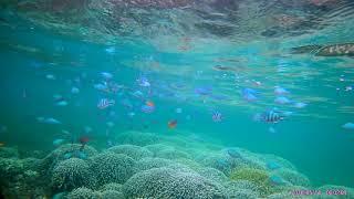 沖縄県本島中部浜比嘉島でのシュノーケリング 海さーの海遊び http://ww...