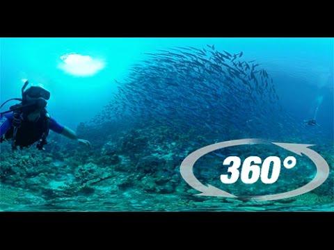 SCUBA BAHAMAS 360 VR Underwater