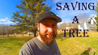 TJV - HOW TO SAVE A DYING TREE - #1051