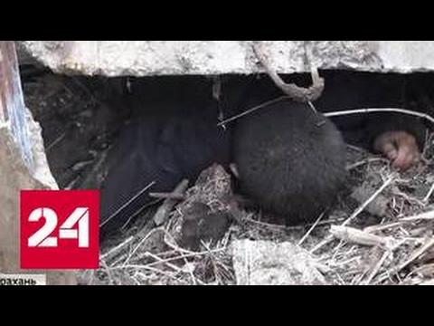 Не ушли от возмездия: в Астрахани убиты бандиты, расстрелявшие сотрудников ДПС