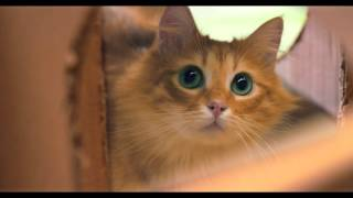 мир глазами кошек - Almo Nature Rus