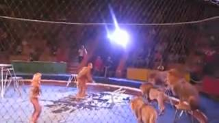 Lew zaatakował trenera w cyrku