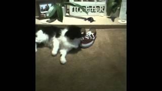 cat shoe fetish