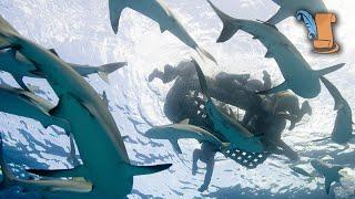 USS Indianapolis Disaster | Shark Week
