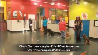 Pampered Pet Training Promo