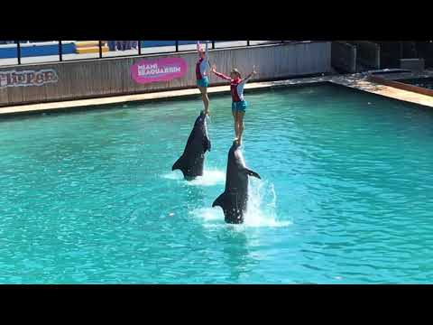 MIAMI SEAQUARIUM 2017  Dolphin Show Flipper