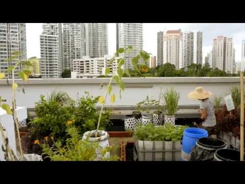 City Crops - Cape Town, London & Singapore