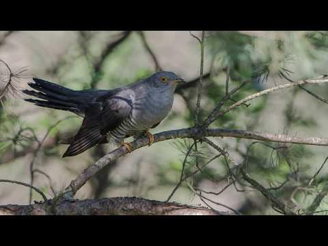 "UraganiuS - ""Cuckoo Was Singing"""