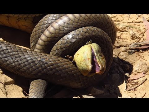 Snakes You DON'T Want To Mess With! - YouTube