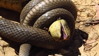Snakes You DON'T Want To Mess With!