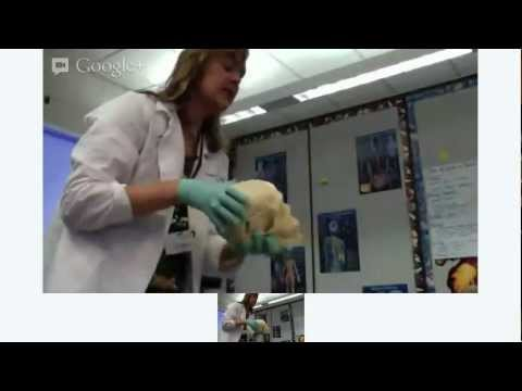 FPMS Science Hour 2 - Somatosensory Presentation