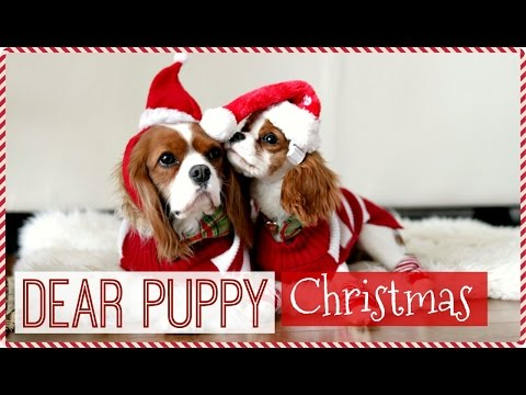 Dear Puppy Milton : Christmas   GIVEAWAY Cavalier King Charles Spaniel puppy