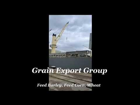 Grains bulk vessel loading (Wheat, Feed Barley, Feed Corn)