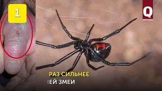 6 опасных животных Крыма