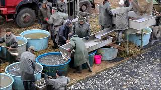 Obor rybářství III. a IV. ročník - Výlov rybníku Nečas