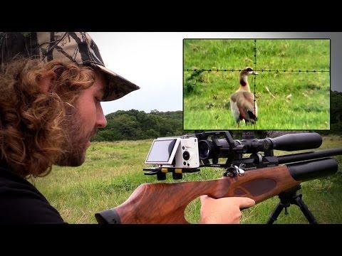 Egyptian Goose Pest Control with an Airgun