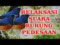 Relaksasi Suara Burung Pedesaan Suara Alam   Mp3 - Mp4 Download