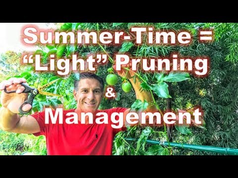 "Passion Fruit Vine Taste-Test | Ripe vs. Unripe | Summer ""Light"" Pruning Method 