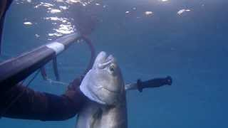 Video Pesce serra 5 kg alle prime luci dell' alba download MP3, 3GP, MP4, WEBM, AVI, FLV Januari 2018