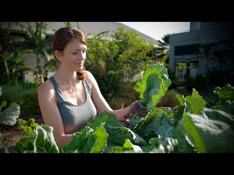 Growing sustainable food expertise at the University of Hawaii--West Oahu