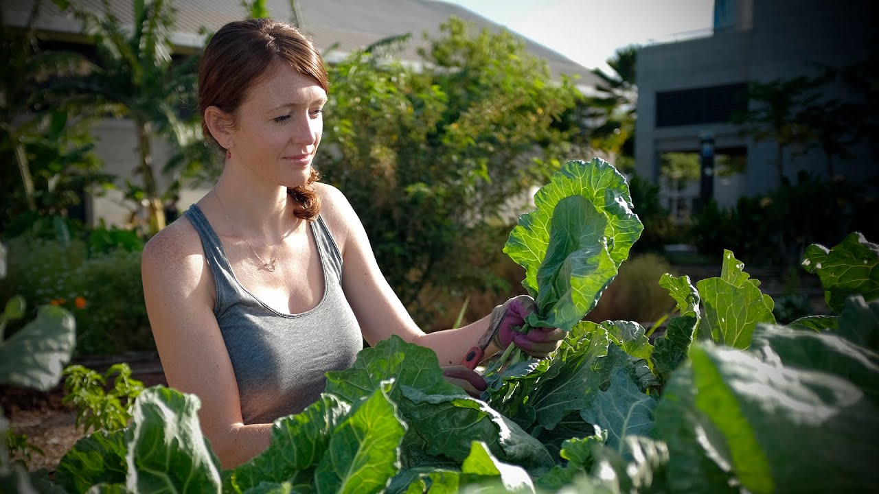 Growing Sustainable Food Expertise At The University Of Hawaii  West Oahu    YouTube