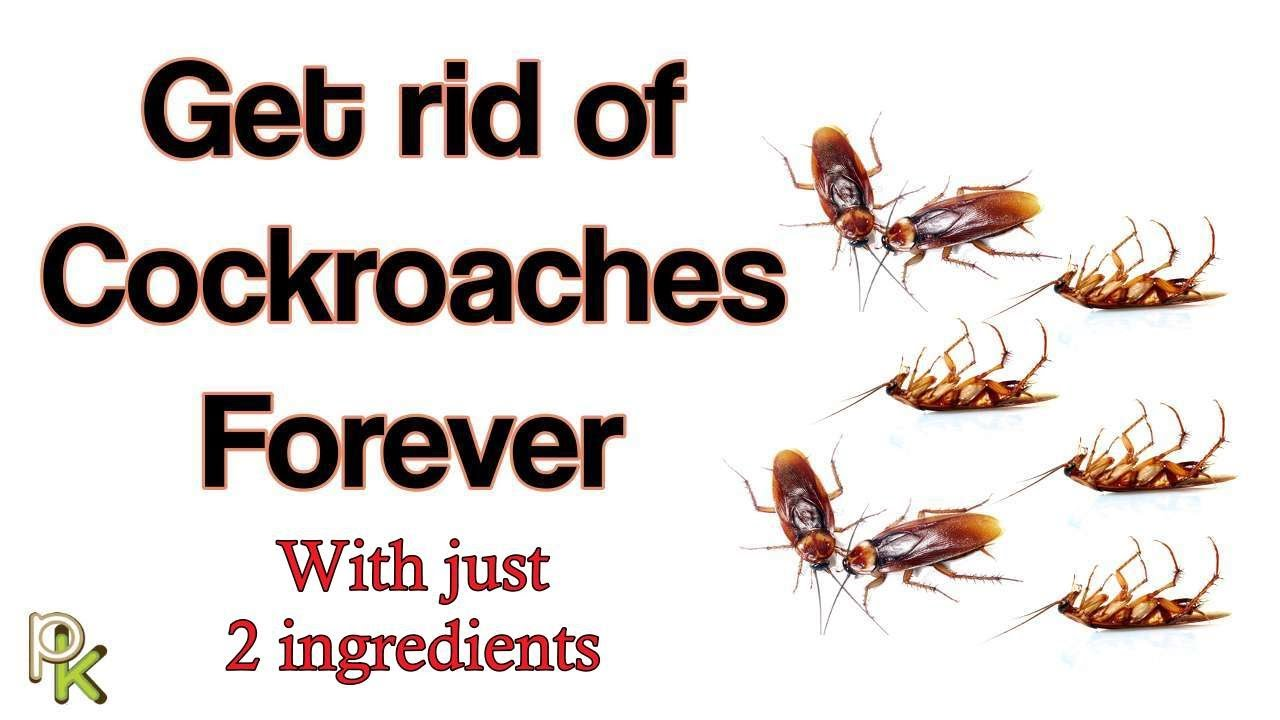 How To Get Rid Of Cockroaches In Your Home With Just 2 Ingredients Youtube