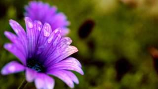 สมมุติ วิมุตติ: หลวงพ่อชา สุภัทโท