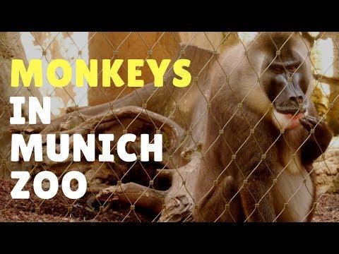 Monkeys in Munich Zoo Hellabrunn 2017 - Travel Germany [4K]