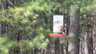 Another Free Birdfeeder!
