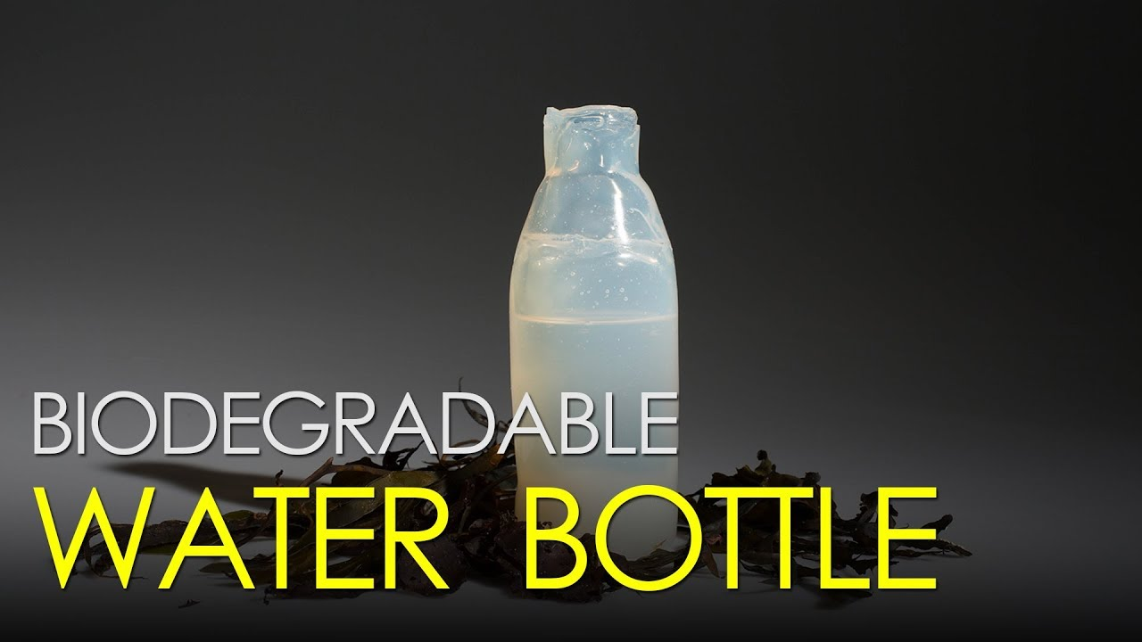 4c130049bd 17 Items That Can Now Become Biodegradable Thanks to Recycling Innovations