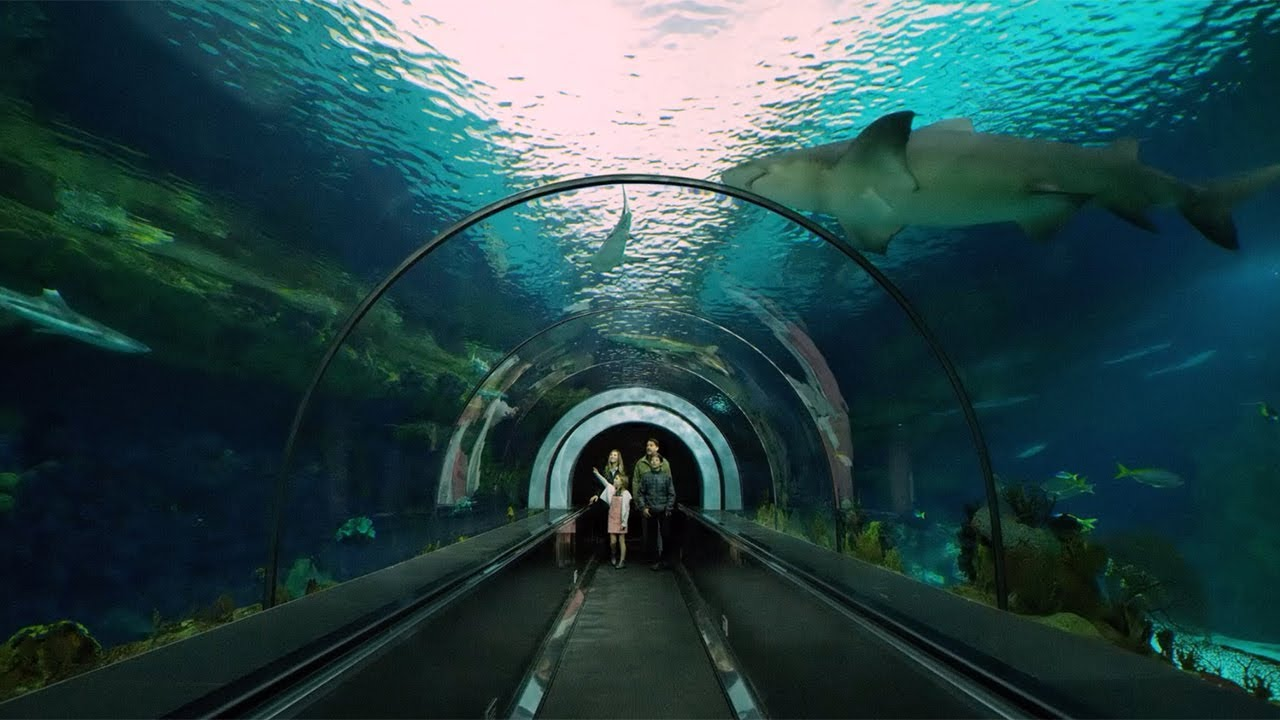 California 101 Seaworld San Diego 5 Amazing Things Youtube