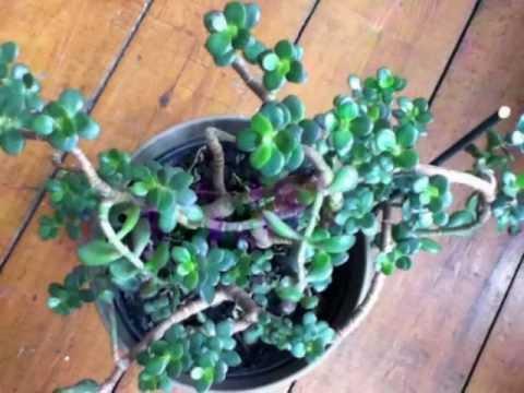 feng shui plants flowers youtube. Black Bedroom Furniture Sets. Home Design Ideas