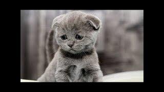 СМЕШНЫЕ КОТЫ Смешное видео Приколы с котами и кошками 2017  Котята Котенки Котеночки