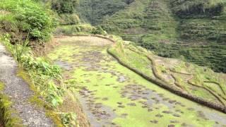 世界遺産、フィリピン・コルディリェーラの棚田群3 【バナウェ】