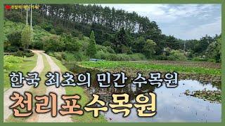 한국 최초의 민간 수목원, 충남 태안에 있는 천리포수목…