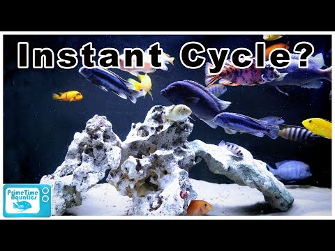 How To Cycle A Fish Tank FAST!