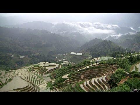Dragon's backbone rice terraces Dazhai Longsheng China