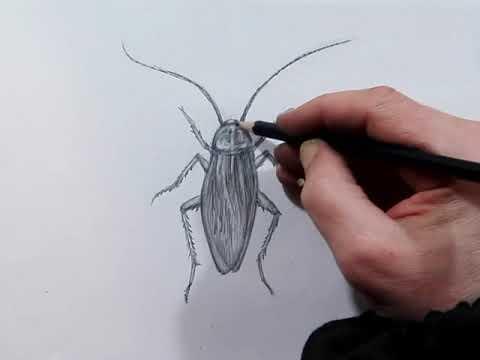 Как нарисовать таракана