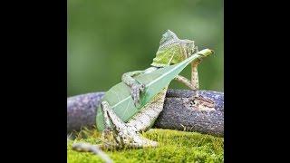 Mình Yêu Nhau Đi [guitar] nhóm Con Tò Vò