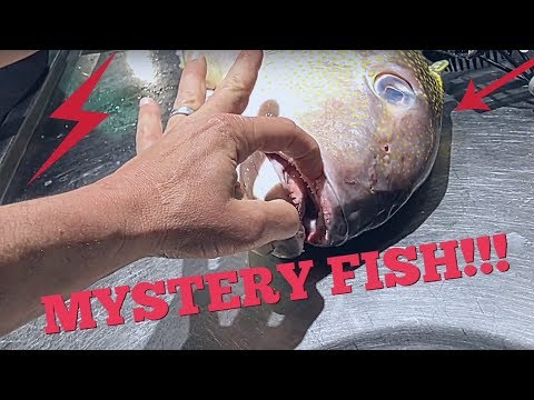 How To Cook Tilefish - Viva Frei Food Vlog